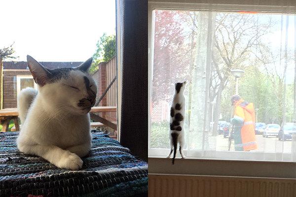 Dit zijn twee losse foto's naast elkaar geplakt.