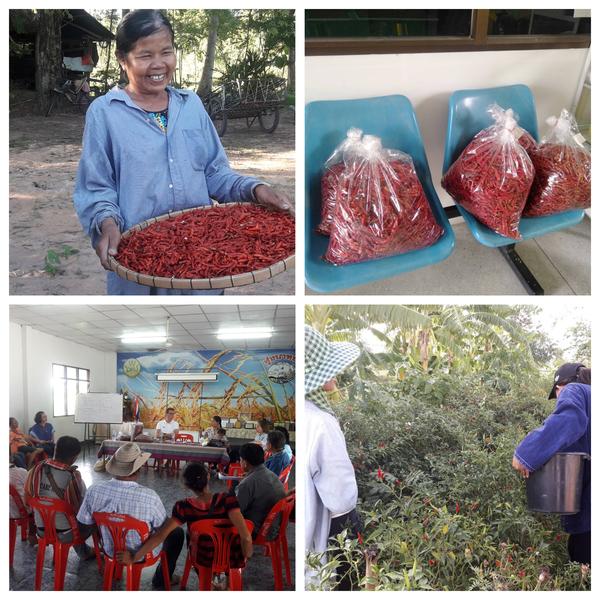 Verse oogst. Plukken, verzamelen, drogen en kort vergaderen