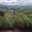 How Is COVID-19 Impacting Coffee Producers?