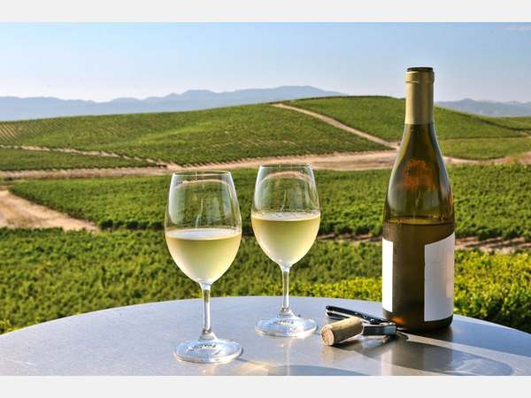 Napa Vineyards Prepare To Resume Wine Tasting With Modifications