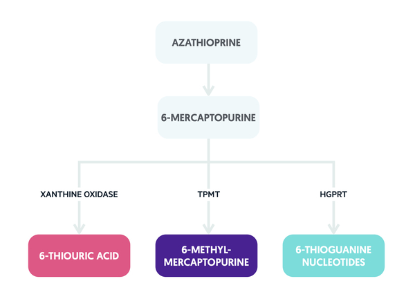 Metabolism of Azathioprine