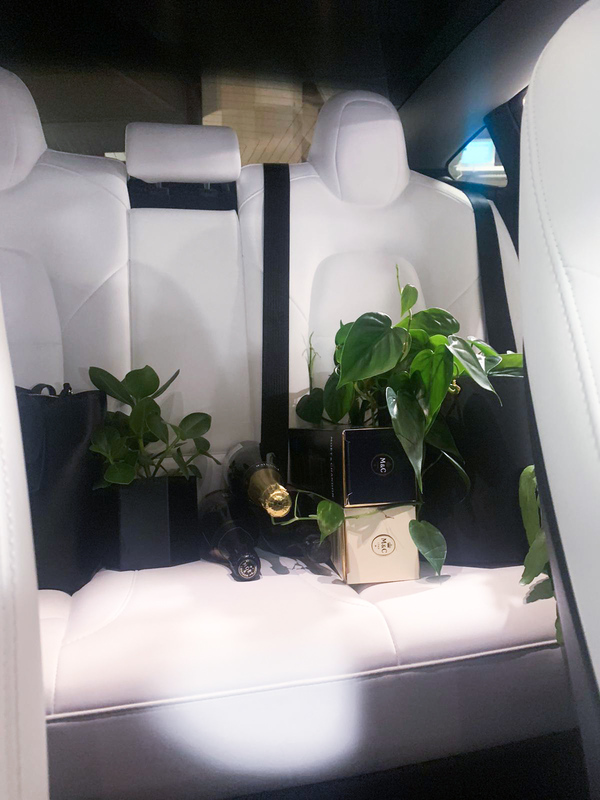 Bringing the plants and champagne back to the office.