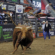 Endeavor's Pro Bull Riders Will Allow Fans in Arena at South Dakota Event (EXCLUSIVE)