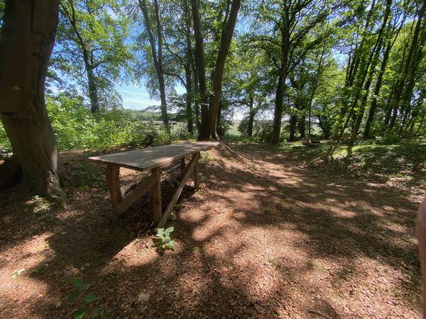 Konferenzräume gibt es auch im Wald - hier am Ostrand der Leucht in Kamp-Lintfort.