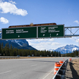 Breeding wolf killed on highway, putting future of Banff pack in jeopardy