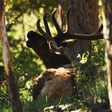 Estes Park, struggling amid pandemic, welcomes Rocky Mountain National Park reopening