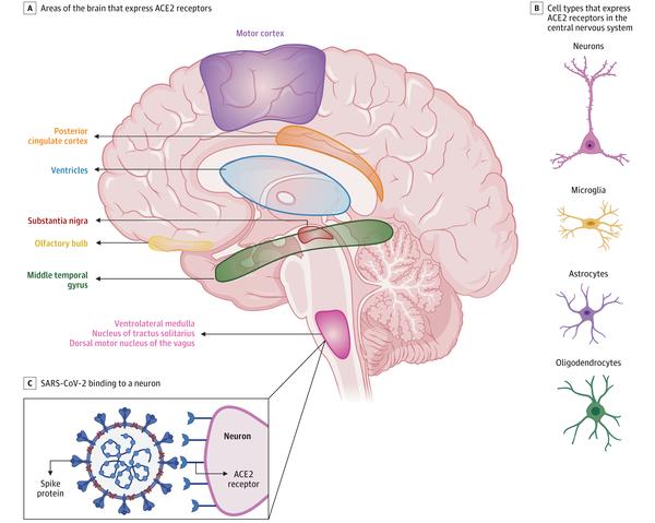 COVID-19 z neurologicznego punktu widzenia