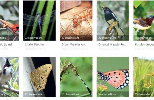 Naturalists spot over 1,300 species in Kerala's backyards