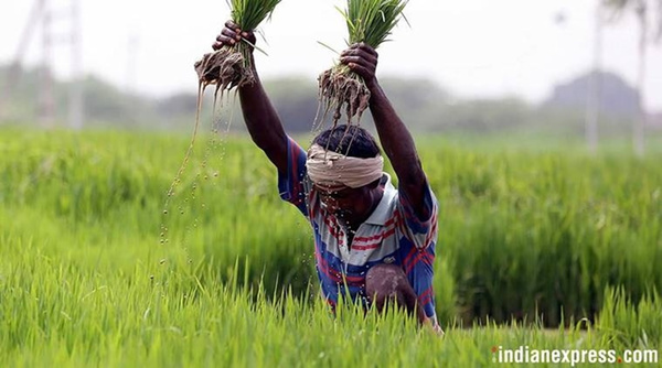 Punjab: Amid heatwave, advancement of paddy sowing date to spike water extraction by 30%