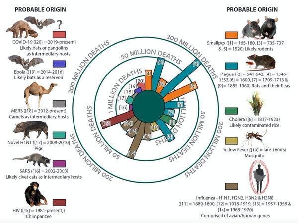 Skąd te wszystkie pandemie... i co mają do tego zwierzęta (oraz jak je traktujemy)