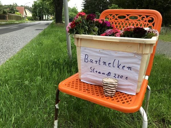 Bartnelken für 2,20 Euro in Phöben. Foto: Anna Sprockhoff
