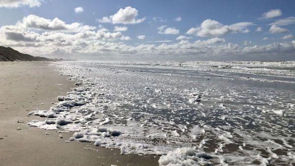 Quelles sont les plages du Nord Pas-de-Calais où la qualité de l'eau est la meilleure ? - Waar vind je zwemwater van goede kwaliteit?