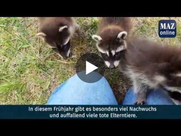 Video: Rainer Schüler