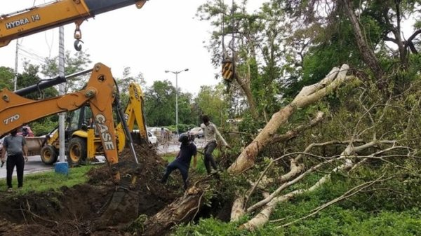 Kolkata's green crusaders give a second lease of life to trees uprooted by cyclone Amphan