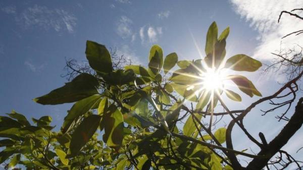 Sécheresse dans le Dunkerquois et les Flandres : les mesures sont renforcées - Droogtemaatregelen worden strenger