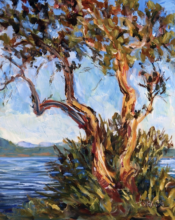 Sold - Arbutus Over Sansum Narrows Salt Spring Island by Terrill Welch