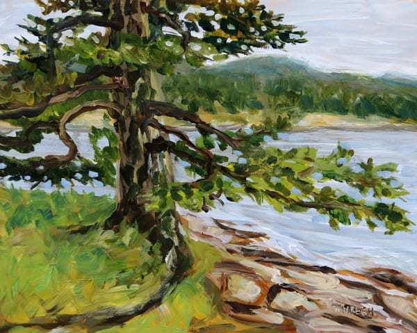 Old Fir Active Pass by Terrill Welch | Artwork Archive