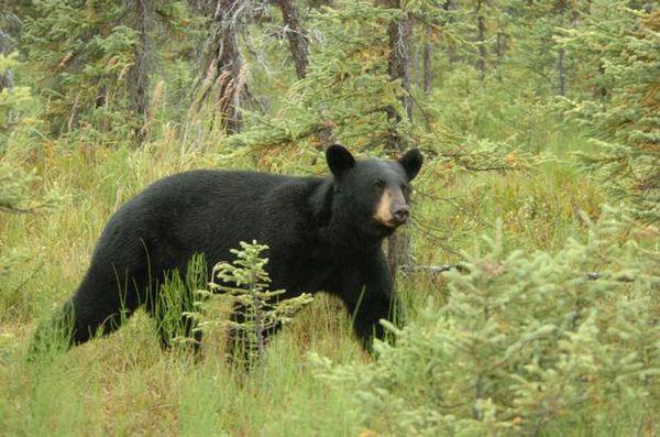 The assault on Alaska's hunting heritage