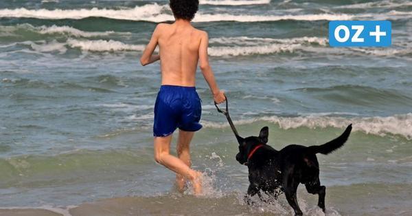 Rügen: Badespaß für Vierbeiner und Familien im Inselosten
