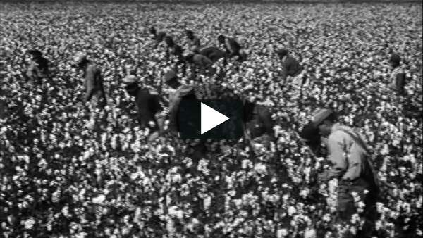 Cotton: The Fabric of Genocide | Vimeo