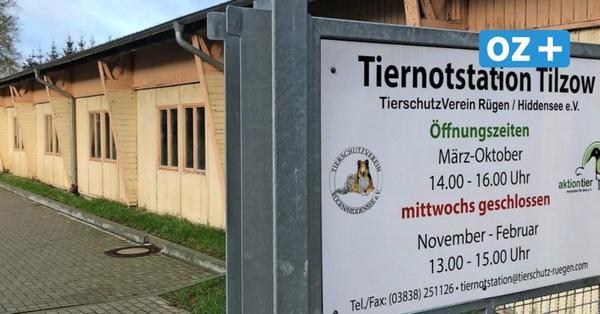 Nach Diskussionen um Erhalt: Tiernotstation in Tilzow macht weiter