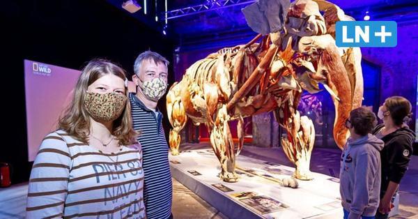 """Bei den """"Körperwelten"""" Lübeck wird größtes Plastinat der Welt gezeigt"""