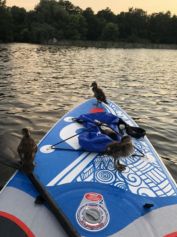 Tierische Begegnung auf dem Petzinsee. Foto: Maike Schultz