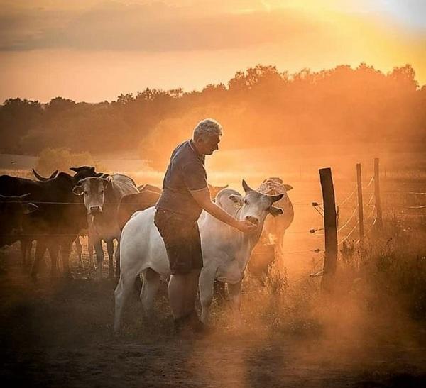 Nils-Peter Czaja bei seinen Zebus auf einer Telzer Weide. Foto: privat