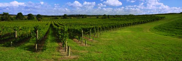 12.07 - BlueWalks - Wijn uit het Noorden - Vin sur vingt, le vin du Nord