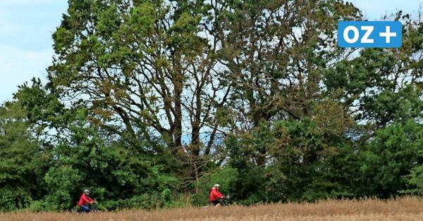 Bäume in Groß Schwansee angebohrt: So reagieren die Menschen im Ort