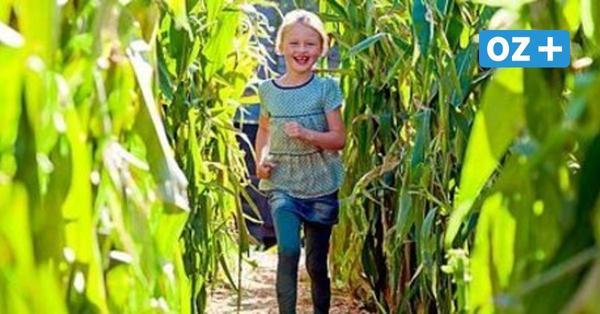 Maislabyrinth bei Karls auf Rügen: Irrspaß unter freiem Himmel in Zirkow