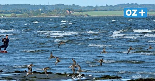 Greifswalder Boddenvor Rügen: Viele Angler und Wassersportler ignorieren Befahrensregeln