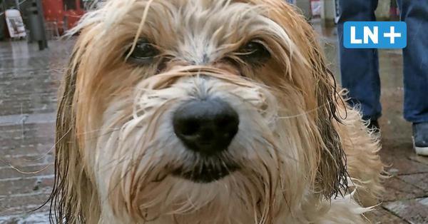 """""""Rico"""" ist wieder da: So fand der vermisste Hund wieder nach Hause"""
