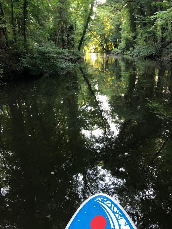 Fast wie im Spreewald sieht es hier aus. Foto: Maike Schultz