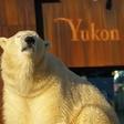 Late-Zoo: Jeden Dienstag und Donnerstag bis 21 Uhr