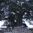 People & Places: The 300-year-old 'human-tree', taboos, prominent persons and food of the Akuapems