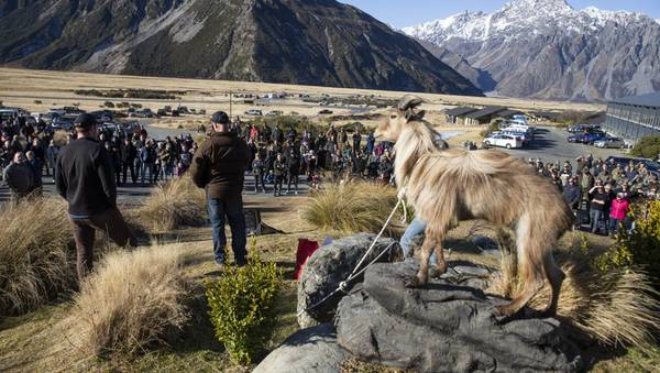 Tahr Jam attracts 1000-strong crowd protesting DOC cull plan