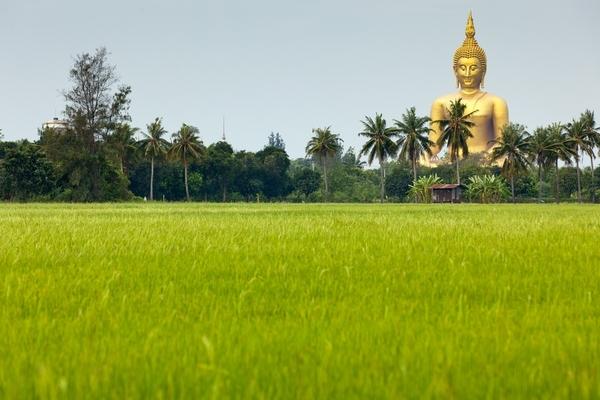 Der größte Buddha Thailands steht in Ang Thong zwischen den Reisfeldern