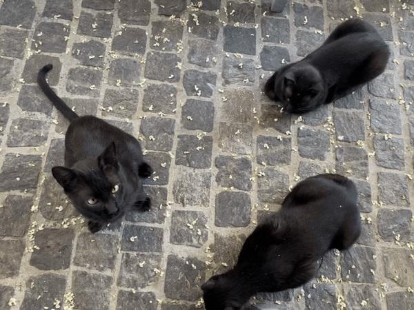Gattini di Atene.