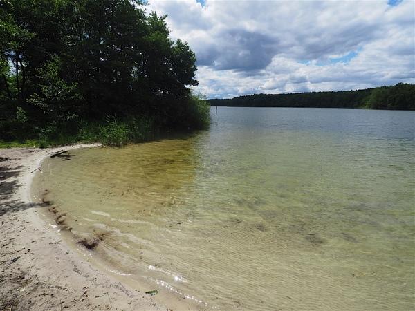 Der Waldstrand am Westufer des Sacrower Sees. Foto: Volker Oelschläger