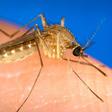 Dlaczego niektórych ludzi komary gryzą częściej niż innych?