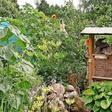 Kleingärten: Das müssen Sie über Pacht und Parzellen wissen