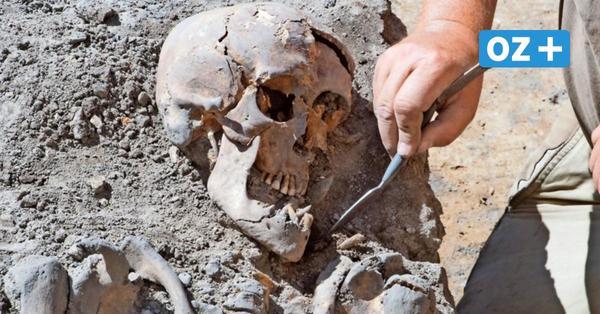 Skelette am Stralsunder Meeresmuseum: Forscher könnten weitere Funde machen