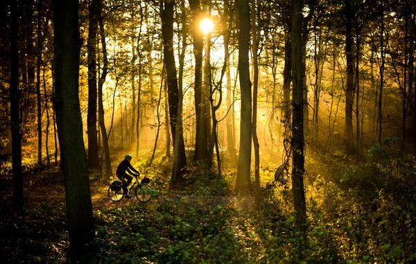 Bei einer Tour durch den Wald lassen sich Lichtspiele erleben. Foto: Julian Stratenschulte/dpa
