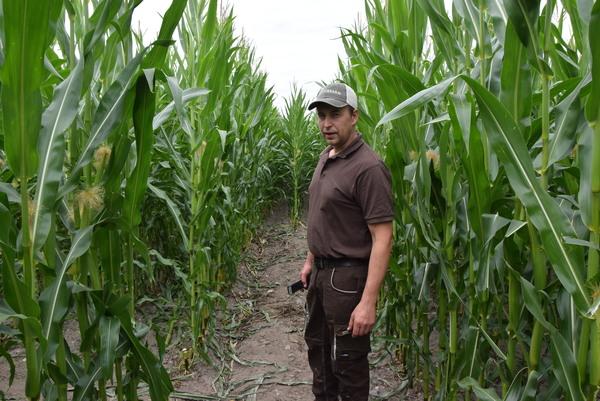 Der Schneerener Landwirt Stephan Ruhnow-Thieße hat ein Labyrinth in sein Maisfeld geschnitten. (Foto: Kathrin Götze)
