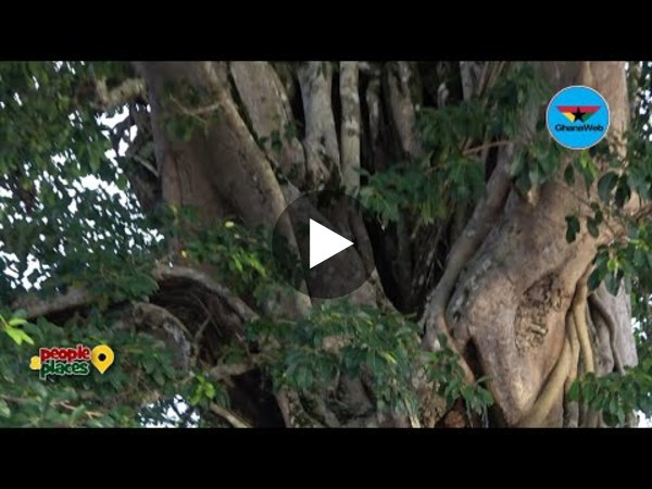 Mpeni Kofi; the tree that turns human at night to guard his people