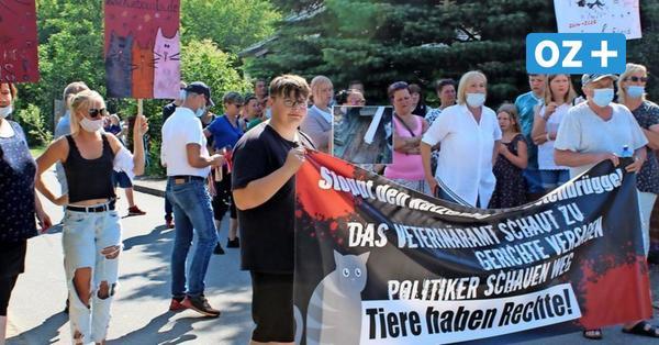Nach Tierschutzdemo in Westenbrügge: Minister schaltet sich ein