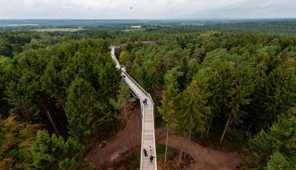 Der neue Baumwipfelpfad in der Lüneburger Heide. (Foto: dpa)