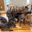 This Couple Spent $55,000 to Make Their House a Haven For Their 20 Elderly and Special-Needs Dogs
