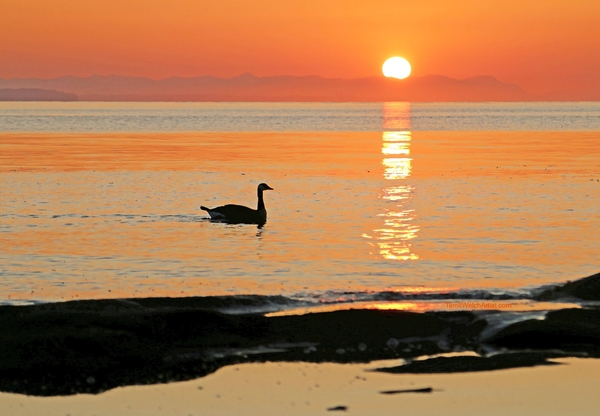 August sunrise over the Strait of Georgia by Terrill Welch